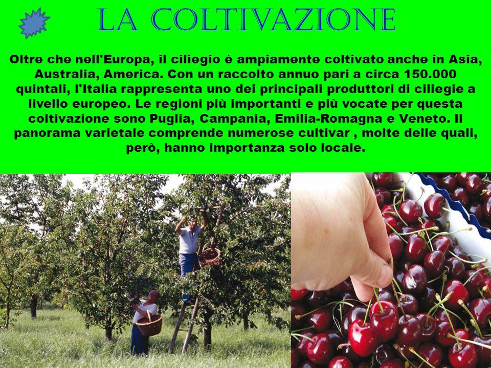 La coltivazione