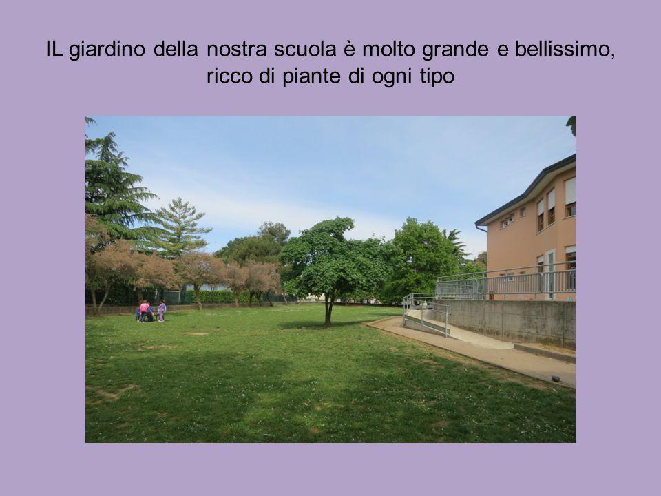 IL giardino della nostra scuola è molto grande e bellissimo, ricco di piante di ogni tipo