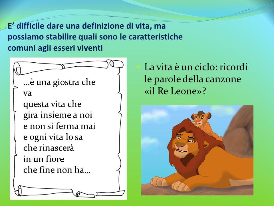 La vita è un ciclo: ricordi le parole della canzone «il Re Leone»