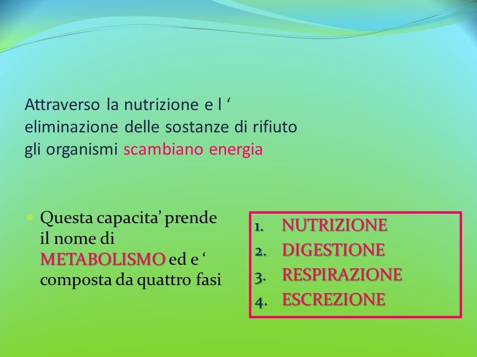 Attraverso la nutrizione e l ' eliminazione delle sostanze di rifiuto gli organismi scambiano energia