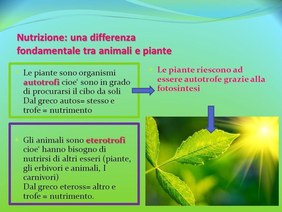 Nutrizione: una differenza fondamentale tra animali e piante