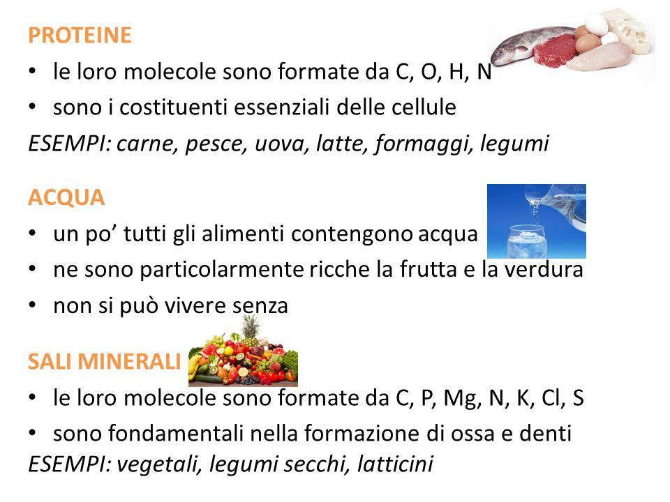 PROTEINE le loro molecole sono formate da C, O, H, N. sono i costituenti essenziali delle cellule.