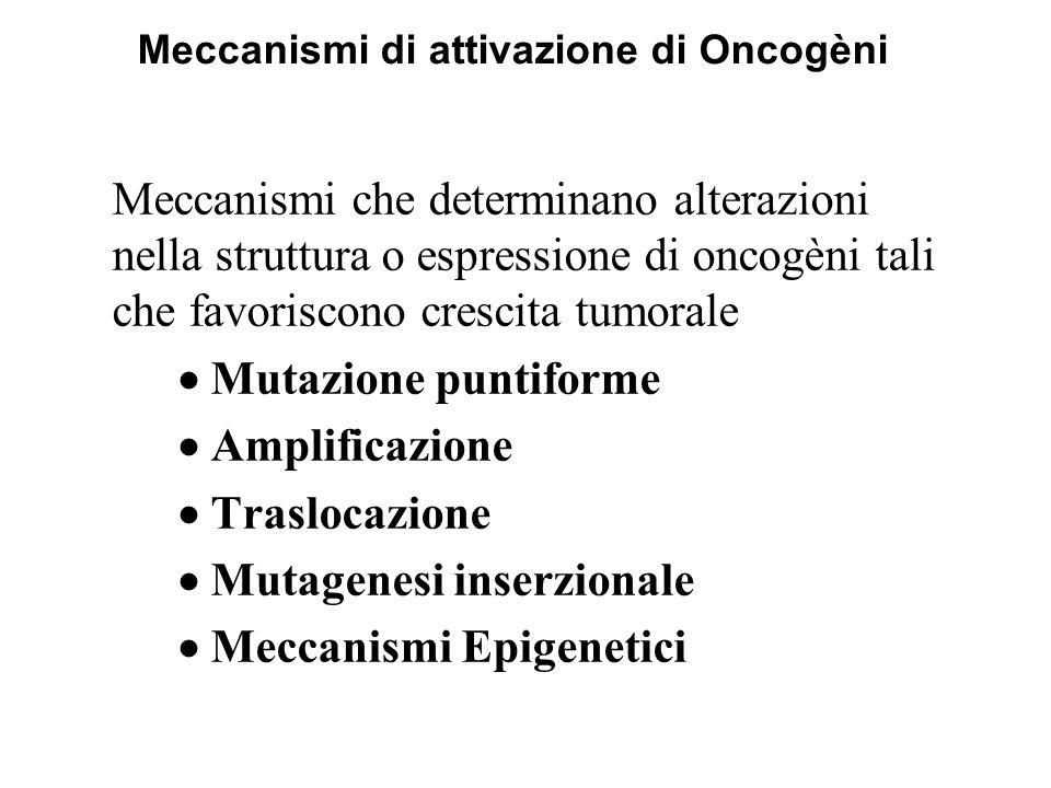 Meccanismi di attivazione di Oncogèni