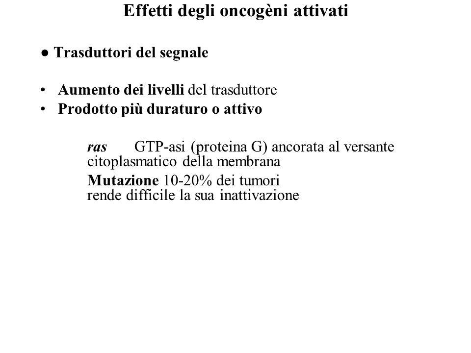 Effetti degli oncogèni attivati