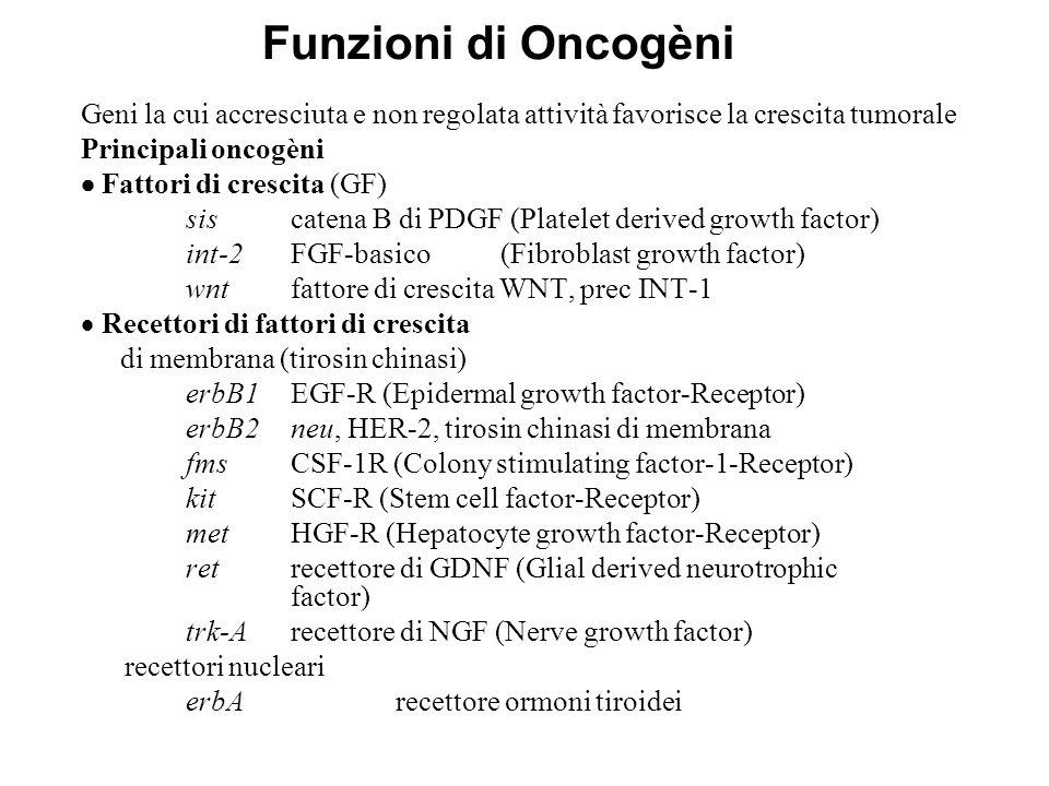 Funzioni di Oncogèni Geni la cui accresciuta e non regolata attività favorisce la crescita tumorale.