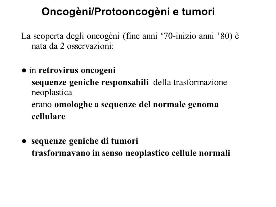 Oncogèni/Protooncogèni e tumori
