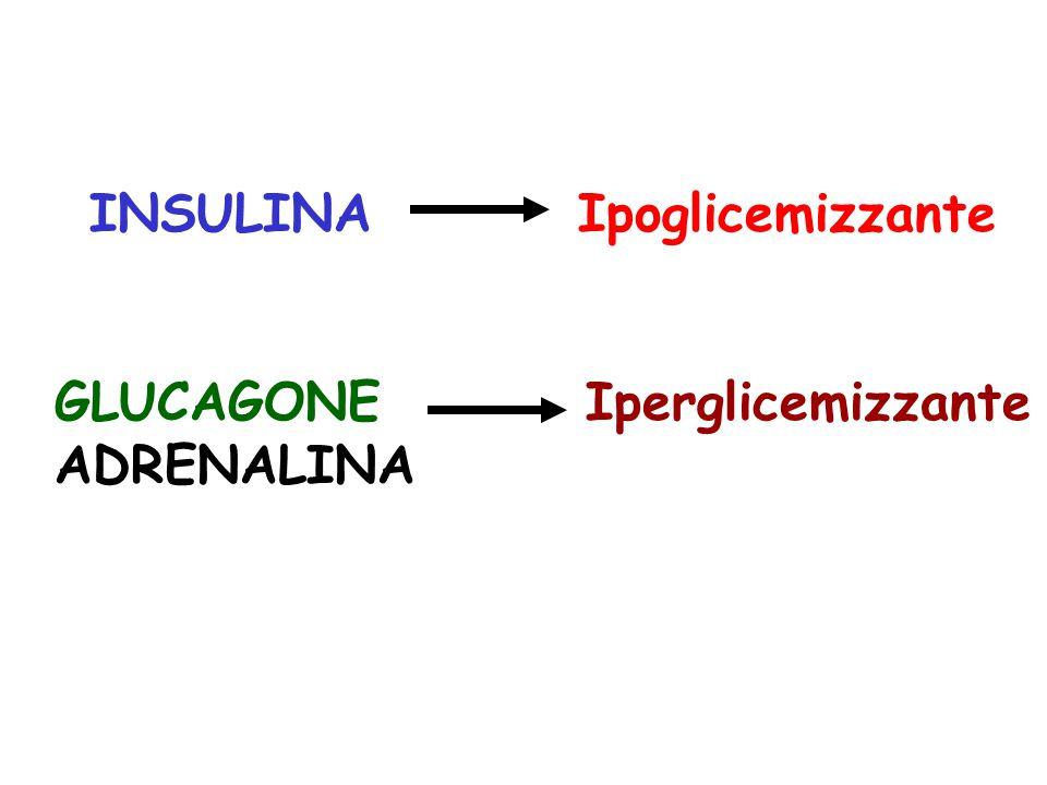 GLUCAGONE Iperglicemizzante ADRENALINA