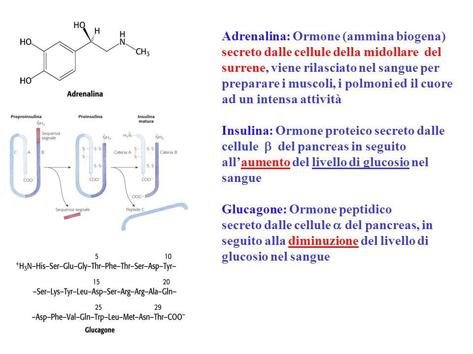 Adrenalina: Ormone (ammina biogena) secreto dalle cellule della midollare del surrene, viene rilasciato nel sangue per preparare i muscoli, i polmoni ed il cuore ad un intensa attività