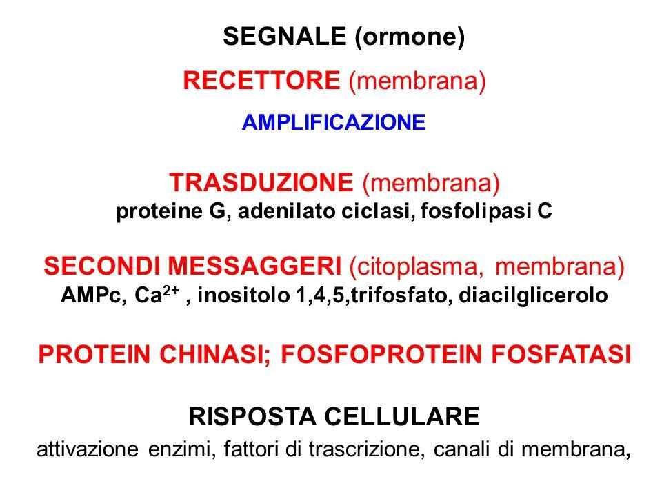 proteine G, adenilato ciclasi, fosfolipasi C
