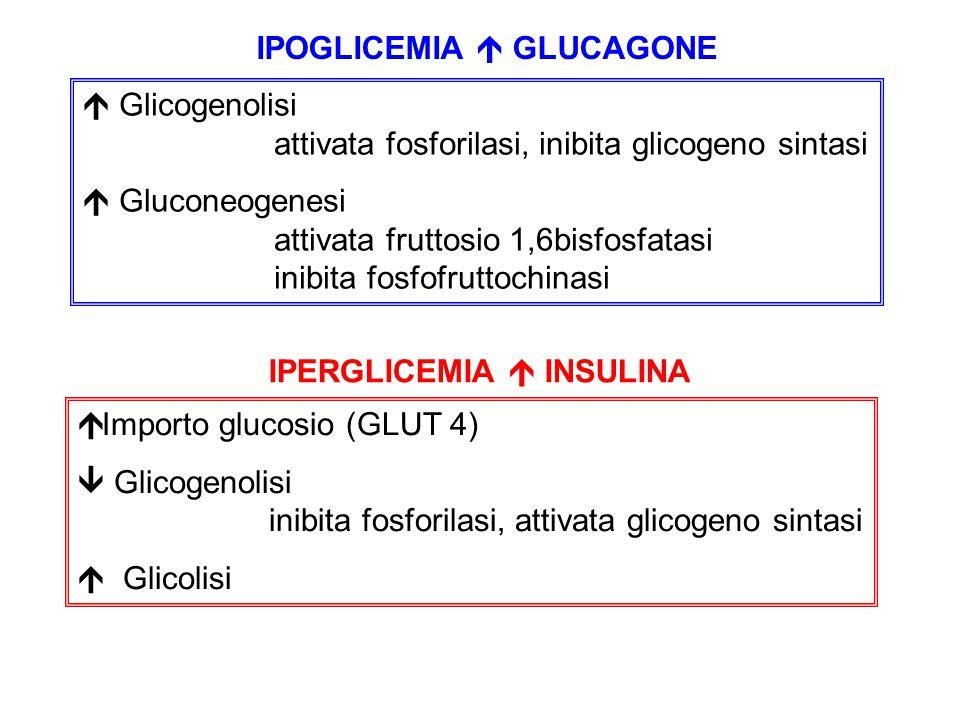 IPOGLICEMIA  GLUCAGONE