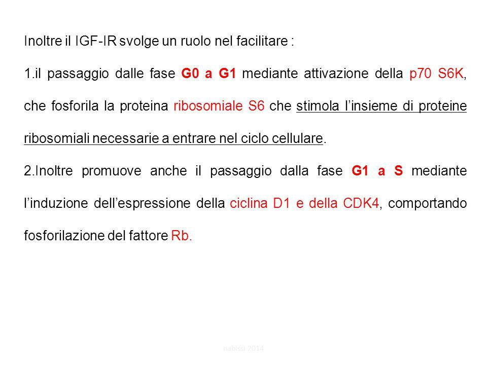 Inoltre il IGF-IR svolge un ruolo nel facilitare :