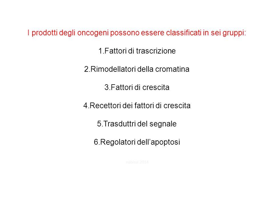 I prodotti degli oncogeni possono essere classificati in sei gruppi: