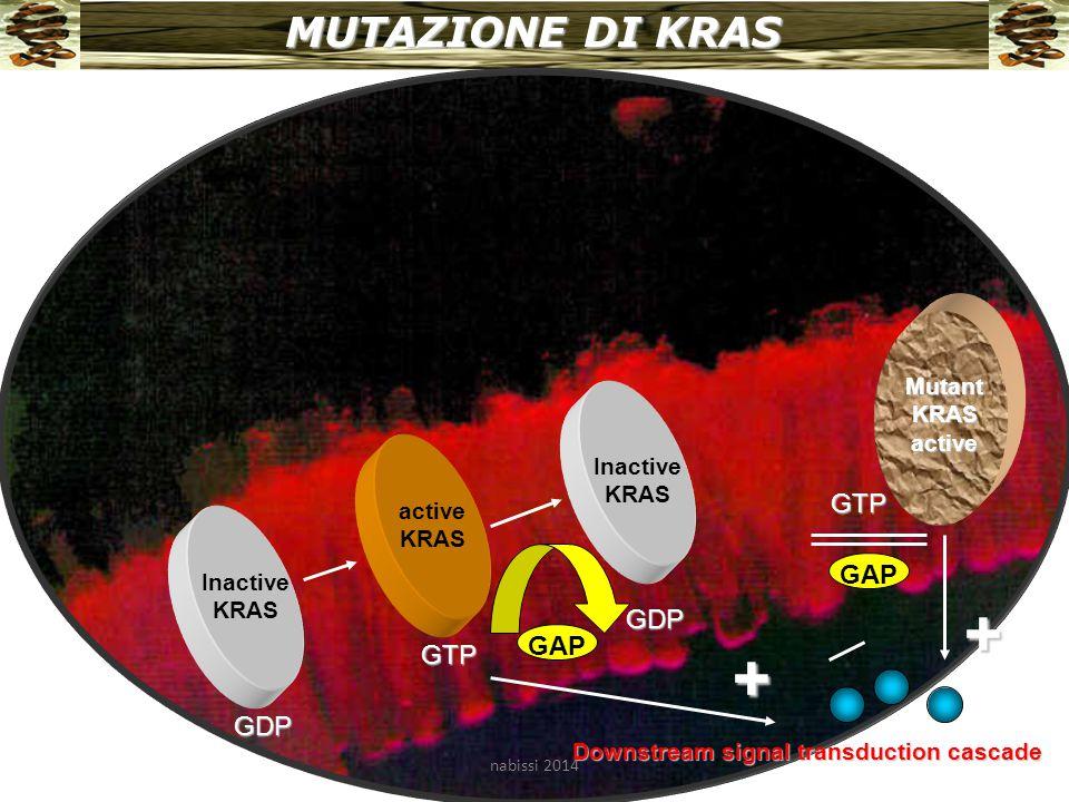 + + MUTAZIONE DI KRAS GTP GAP GDP GAP GTP GDP Mutant KRAS active