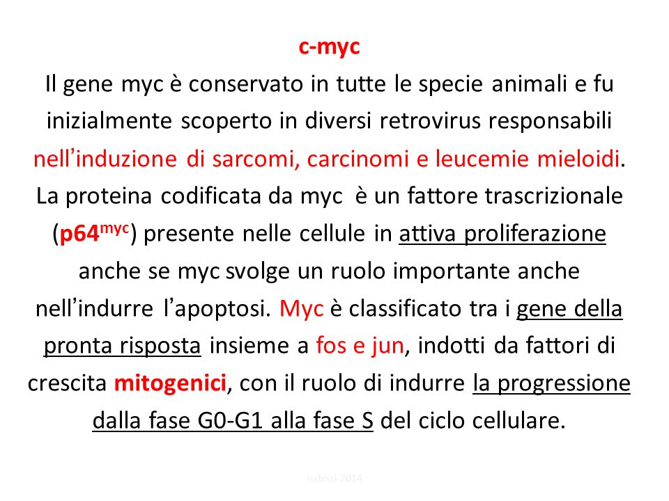 c-myc Il gene myc è conservato in tutte le specie animali e fu inizialmente scoperto in diversi retrovirus responsabili nell'induzione di sarcomi, carcinomi e leucemie mieloidi. La proteina codificata da myc è un fattore trascrizionale (p64myc) presente nelle cellule in attiva proliferazione anche se myc svolge un ruolo importante anche nell'indurre l'apoptosi. Myc è classificato tra i gene della pronta risposta insieme a fos e jun, indotti da fattori di crescita mitogenici, con il ruolo di indurre la progressione dalla fase G0-G1 alla fase S del ciclo cellulare.