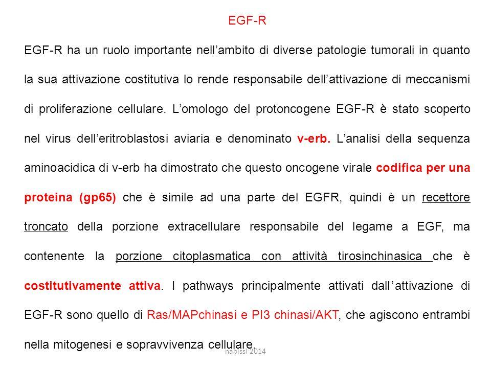 EGF-R