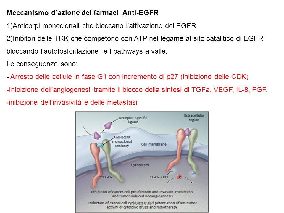 Meccanismo d'azione dei farmaci Anti-EGFR
