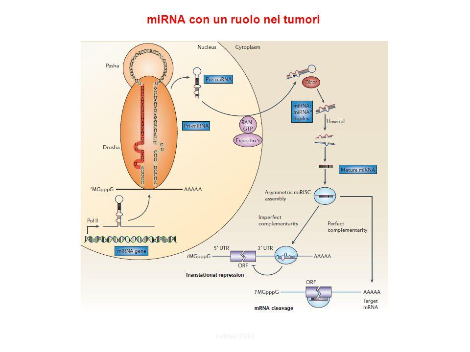 miRNA con un ruolo nei tumori