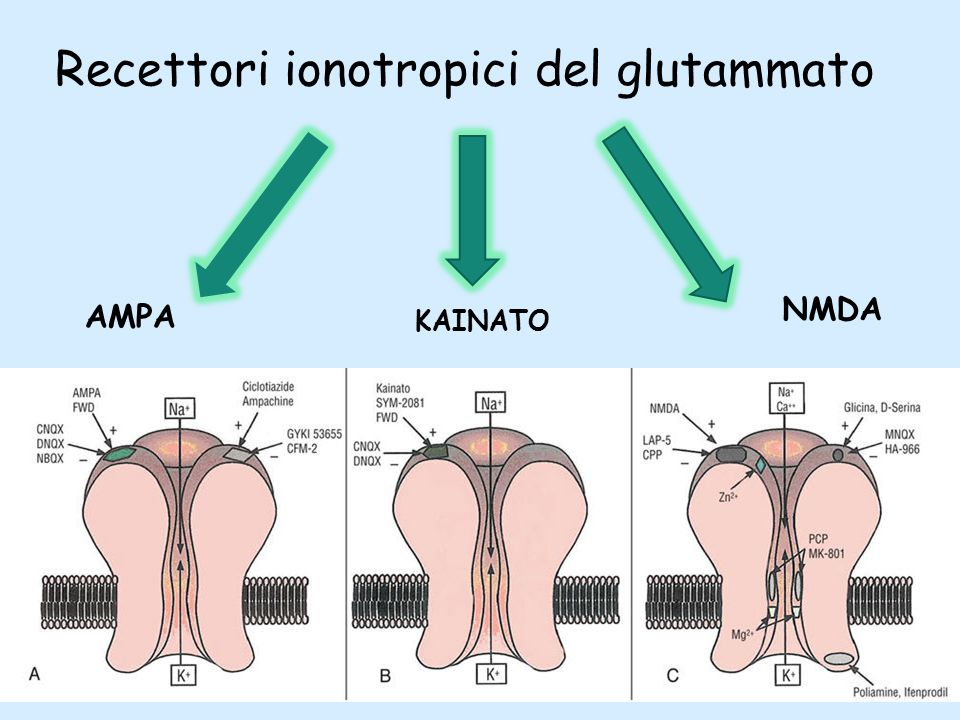 Recettori ionotropici del glutammato