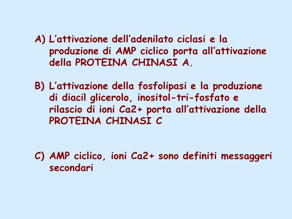 L'attivazione dell'adenilato ciclasi e la produzione di AMP ciclico porta all'attivazione della PROTEINA CHINASI A.