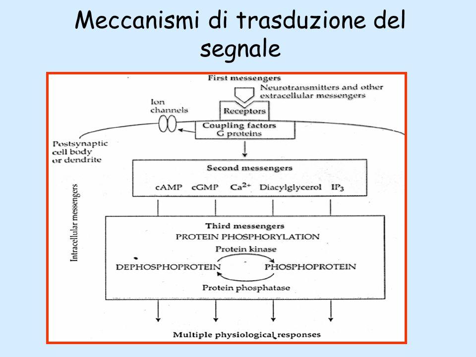 Meccanismi di trasduzione del segnale