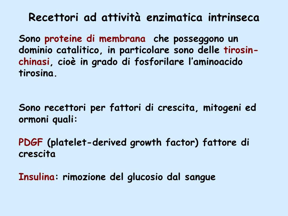 Recettori ad attività enzimatica intrinseca