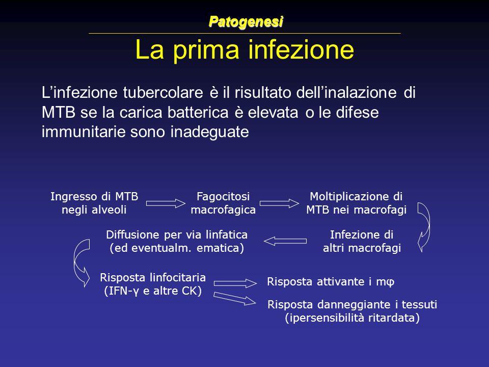 Patogenesi La prima infezione.