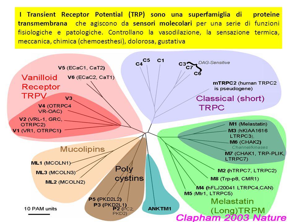 I Transient Receptor Potential (TRP) sono una superfamiglia di proteine transmembrana che agiscono da sensori molecolari per una serie di funzioni fisiologiche e patologiche.