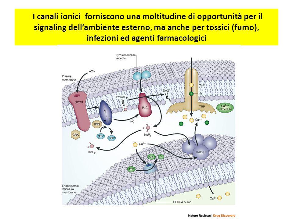 I canali ionici forniscono una moltitudine di opportunità per il signaling dell'ambiente esterno, ma anche per tossici (fumo), infezioni ed agenti farmacologici