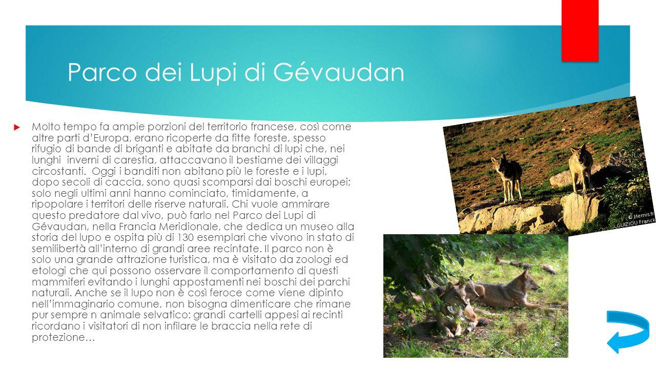 Parco dei Lupi di Gévaudan