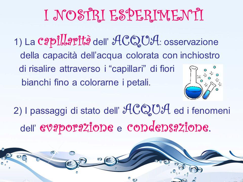 I NOSTRI ESPERIMENTI 1) La capillarità dell' ACQUA: osservazione della capacità dell'acqua colorata con inchiostro.