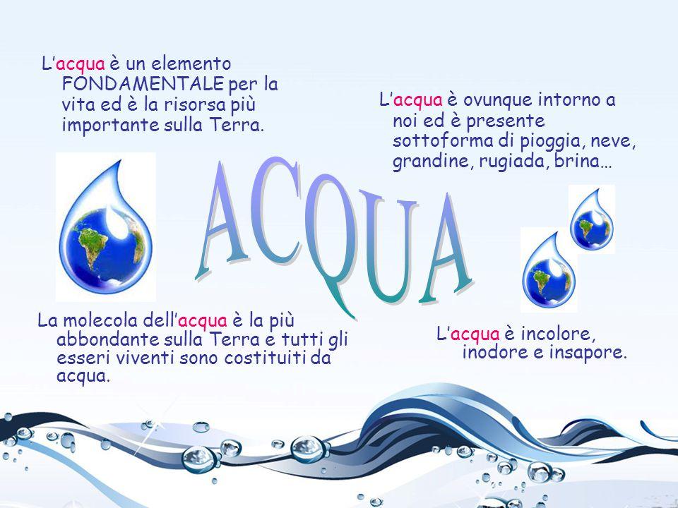 L'acqua è un elemento FONDAMENTALE per la vita ed è la risorsa più importante sulla Terra.