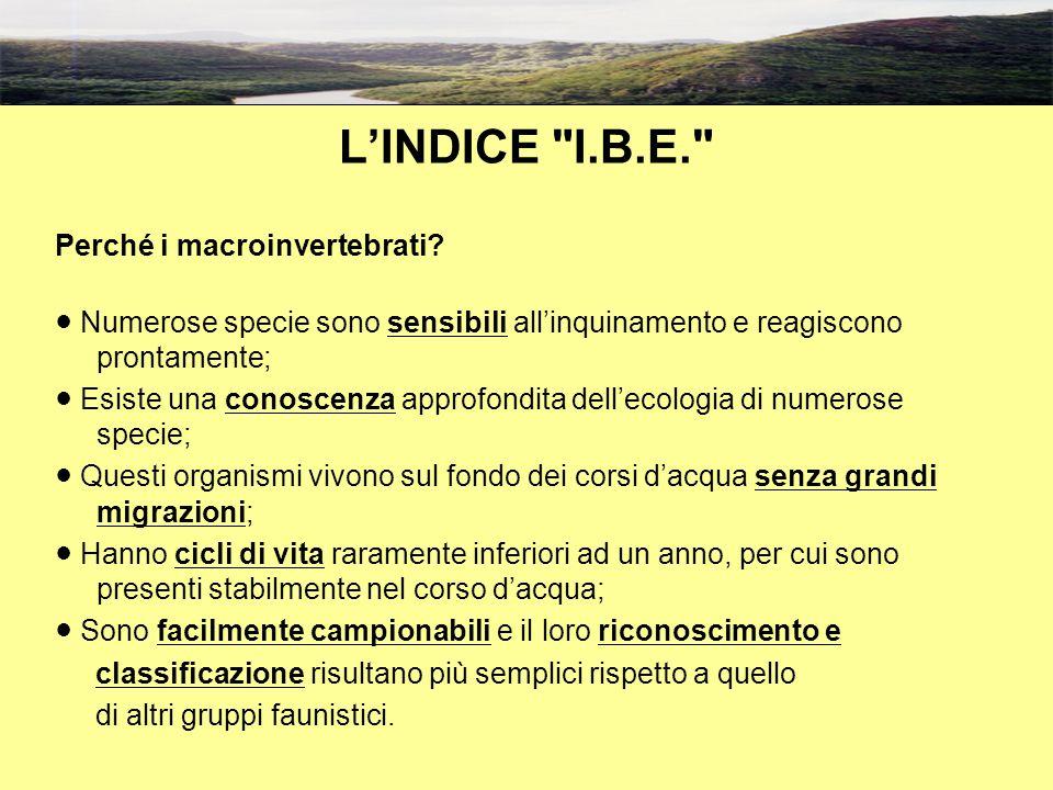 L'INDICE I.B.E. Perché i macroinvertebrati