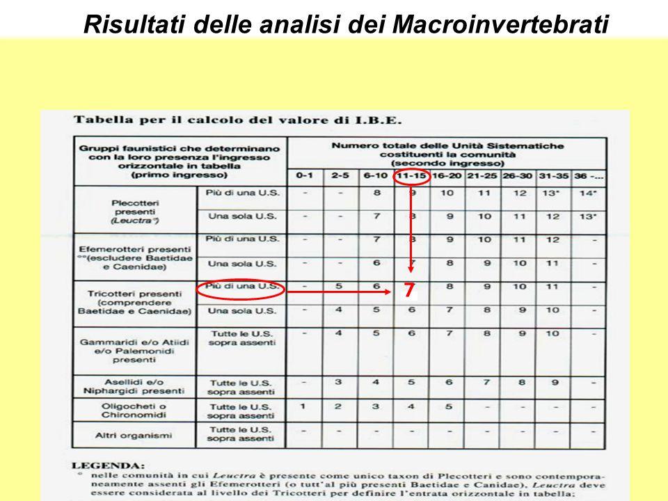 Risultati delle analisi dei Macroinvertebrati