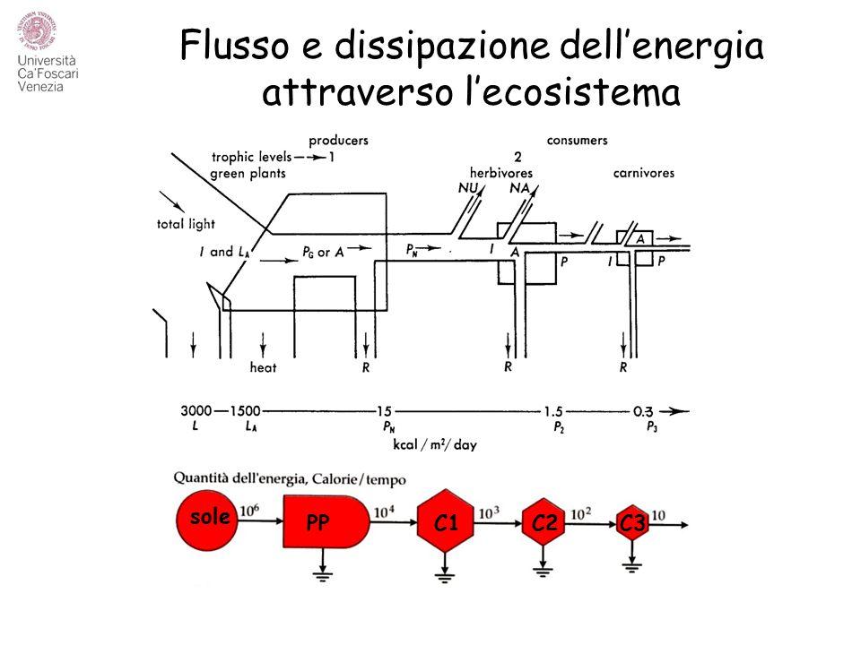 Flusso e dissipazione dell'energia attraverso l'ecosistema
