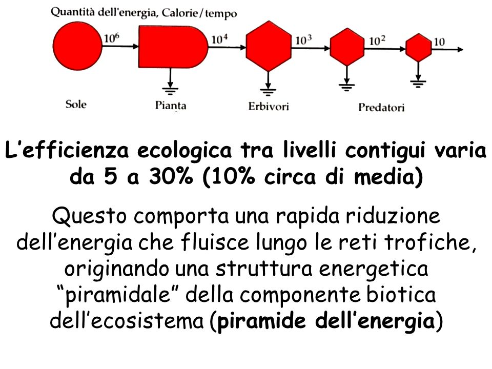 L'efficienza ecologica tra livelli contigui varia da 5 a 30% (10% circa di media)