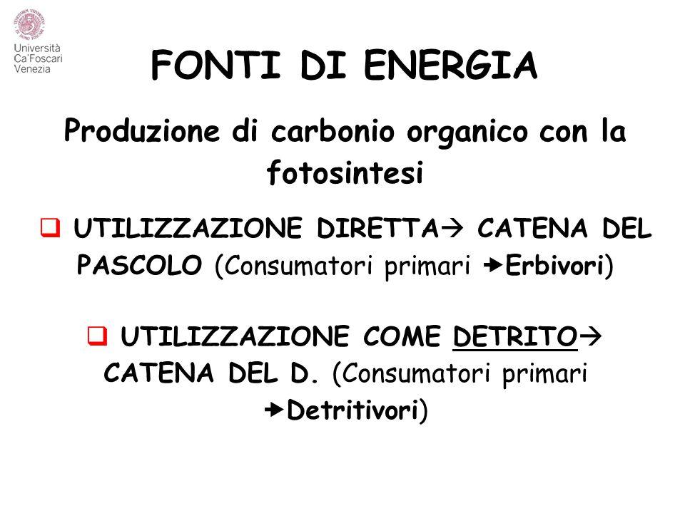 Produzione di carbonio organico con la fotosintesi