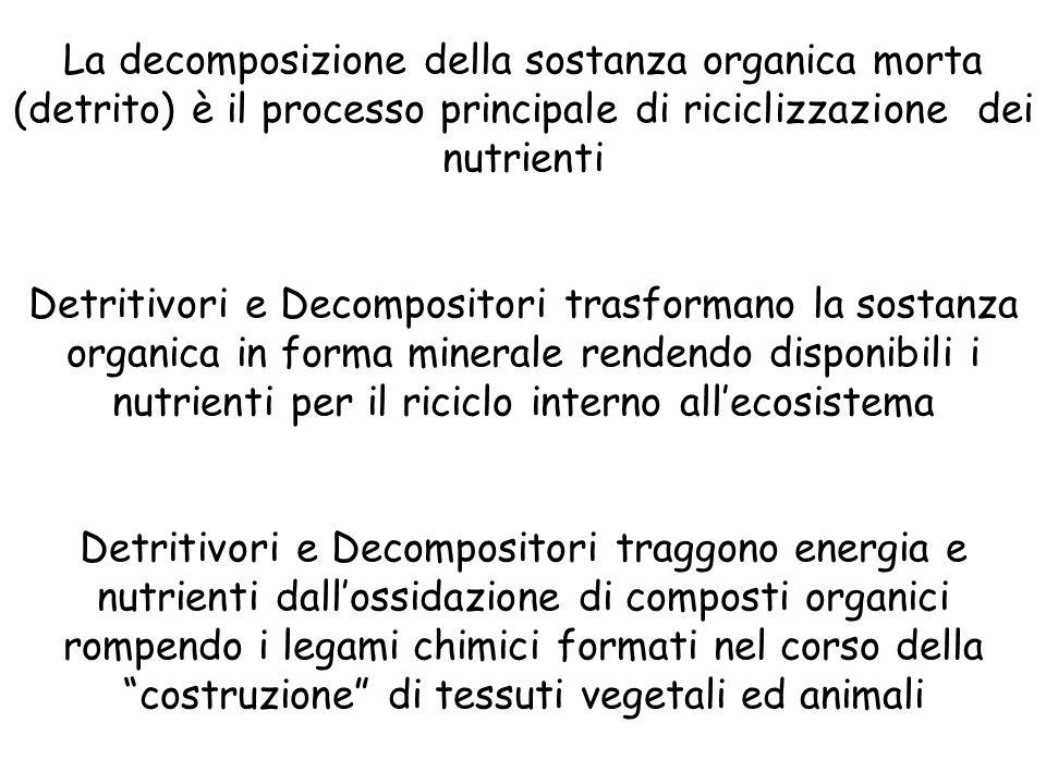 La decomposizione della sostanza organica morta (detrito) è il processo principale di riciclizzazione dei nutrienti