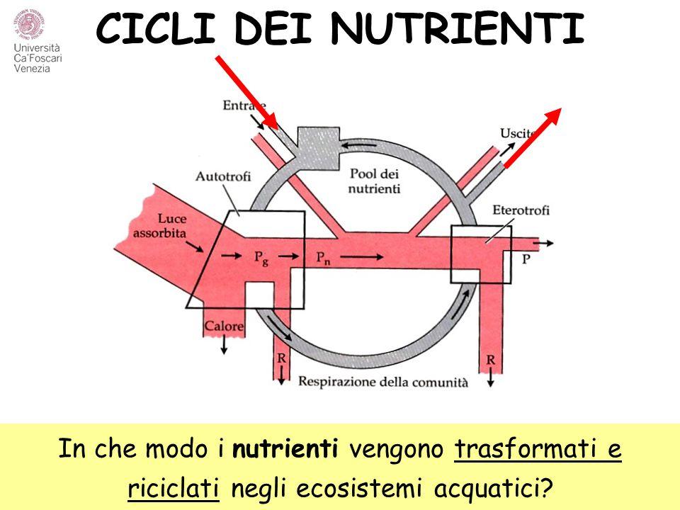 CICLI DEI NUTRIENTI In che modo i nutrienti vengono trasformati e riciclati negli ecosistemi acquatici