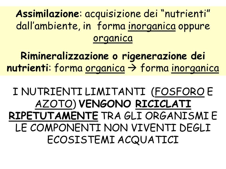 Assimilazione: acquisizione dei nutrienti dall'ambiente, in forma inorganica oppure organica