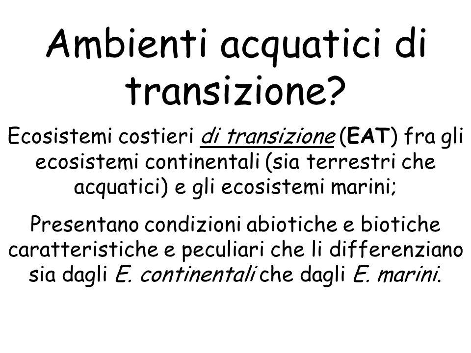 Ambienti acquatici di transizione