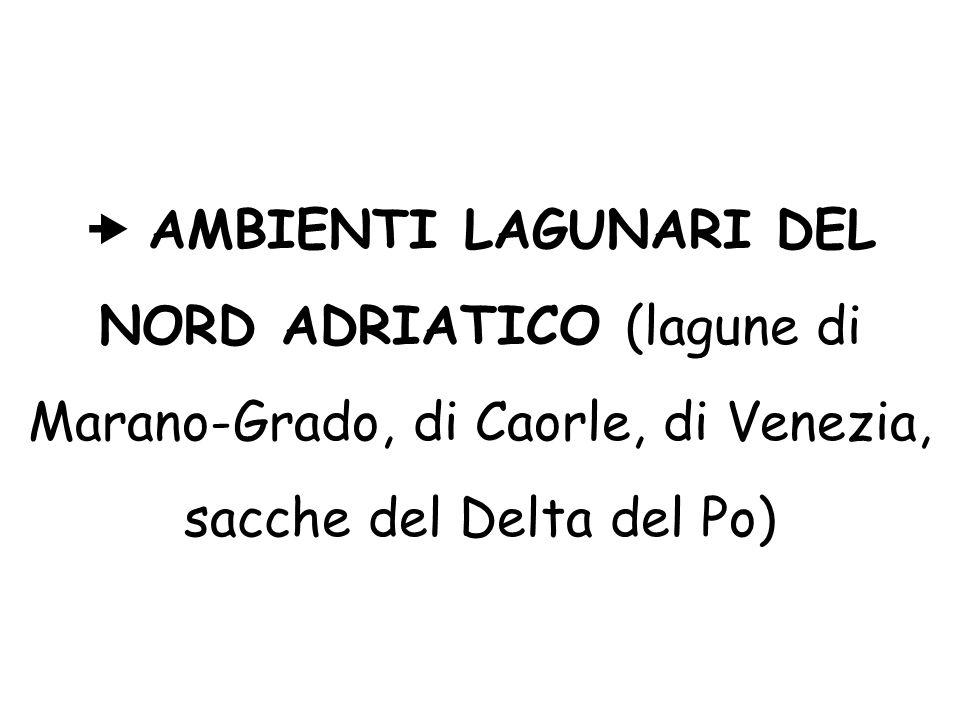  AMBIENTI LAGUNARI DEL NORD ADRIATICO (lagune di Marano-Grado, di Caorle, di Venezia, sacche del Delta del Po)