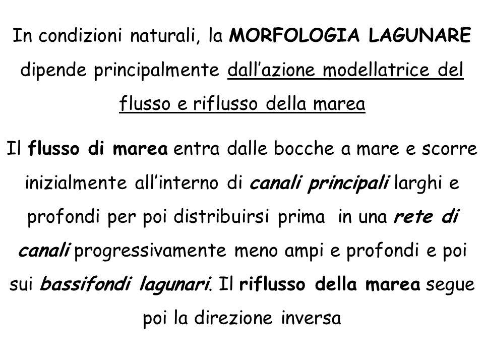 In condizioni naturali, la MORFOLOGIA LAGUNARE dipende principalmente dall'azione modellatrice del flusso e riflusso della marea