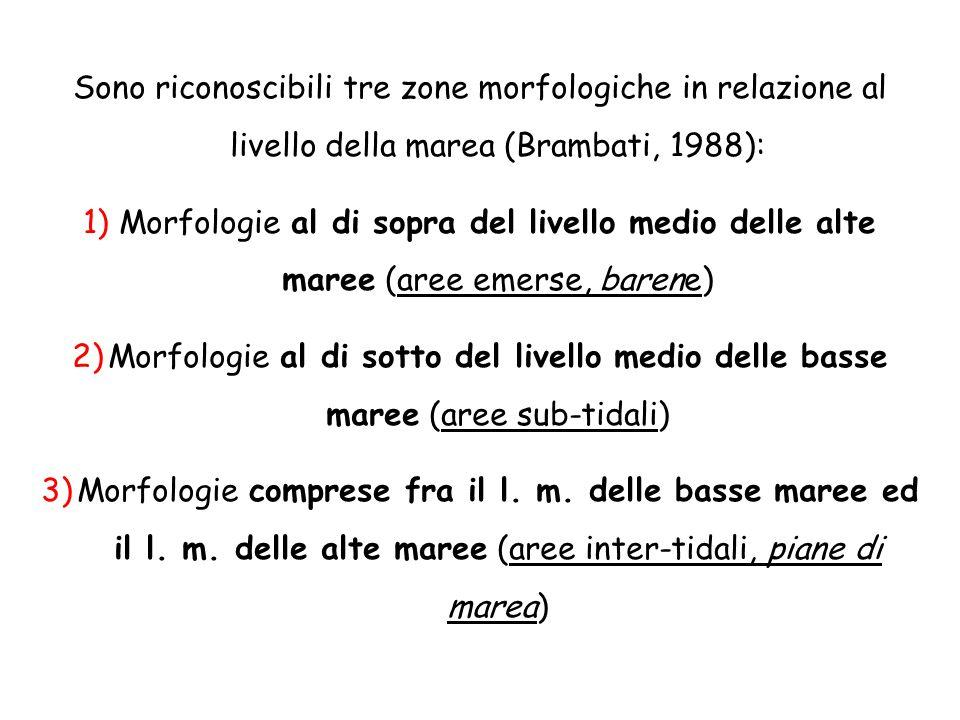 Sono riconoscibili tre zone morfologiche in relazione al livello della marea (Brambati, 1988):