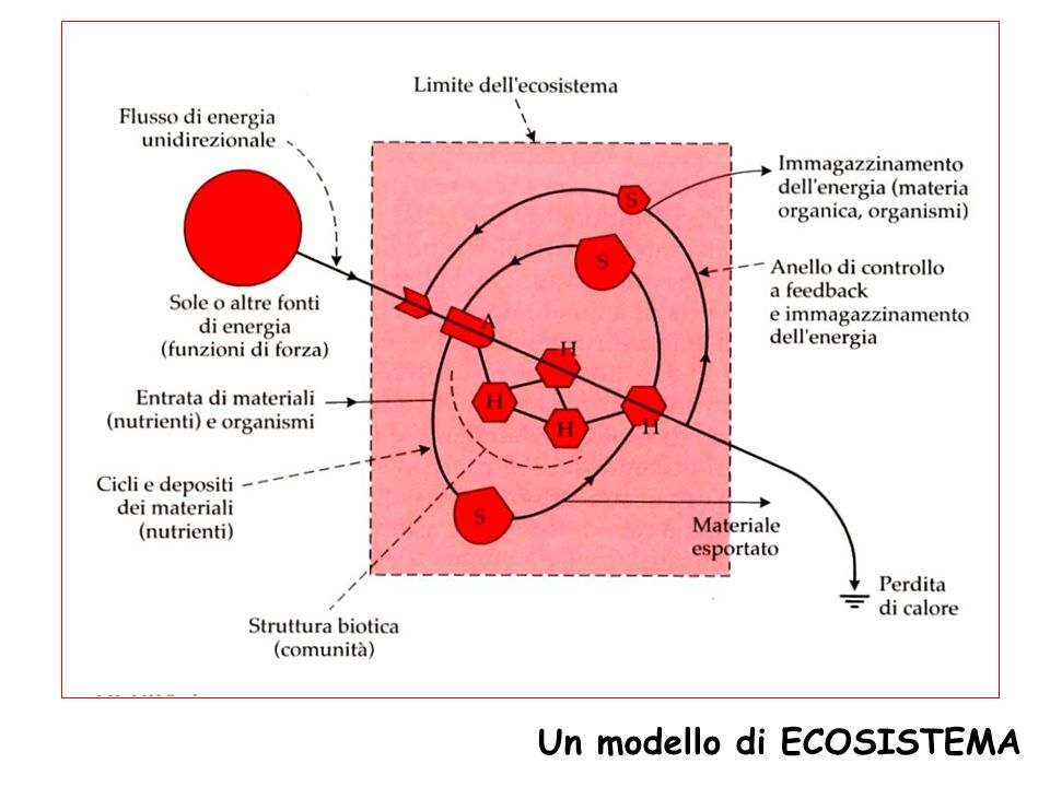 Un modello di ECOSISTEMA