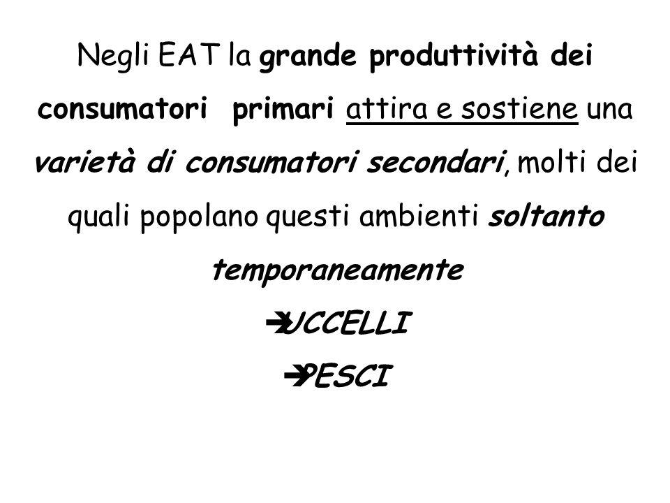 Negli EAT la grande produttività dei consumatori primari attira e sostiene una varietà di consumatori secondari, molti dei quali popolano questi ambienti soltanto temporaneamente