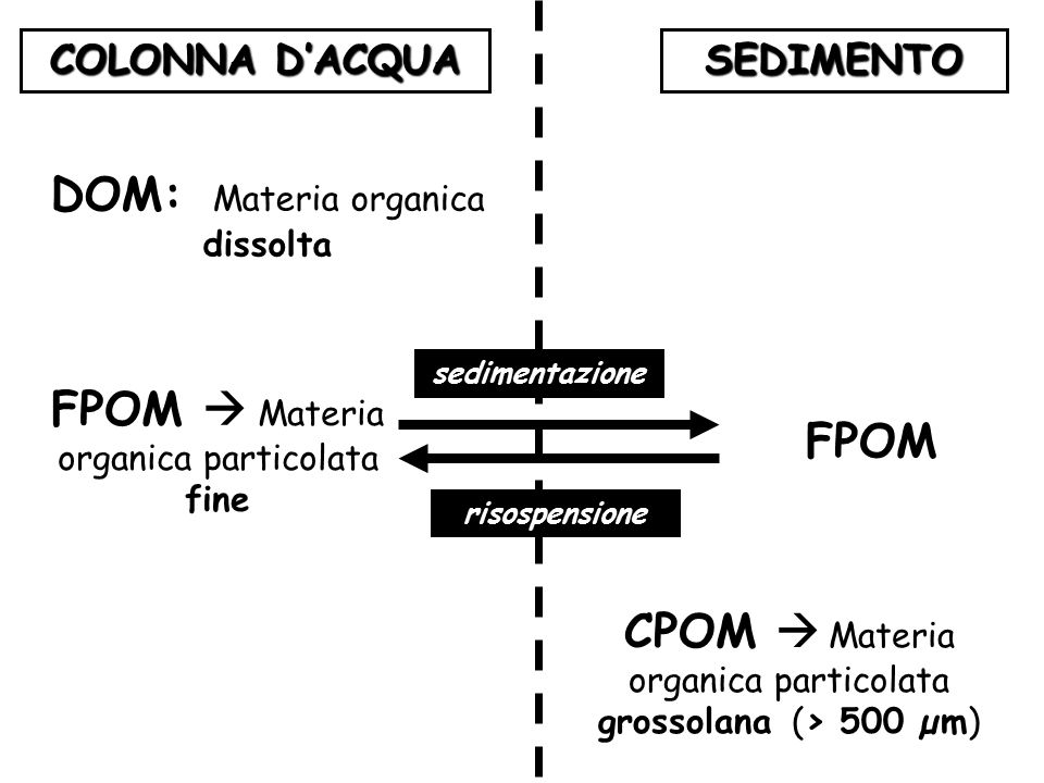 DOM: Materia organica dissolta