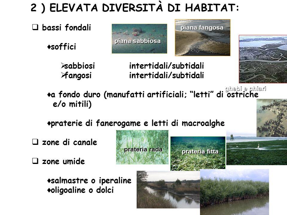 2 ) ELEVATA DIVERSITÀ DI HABITAT: