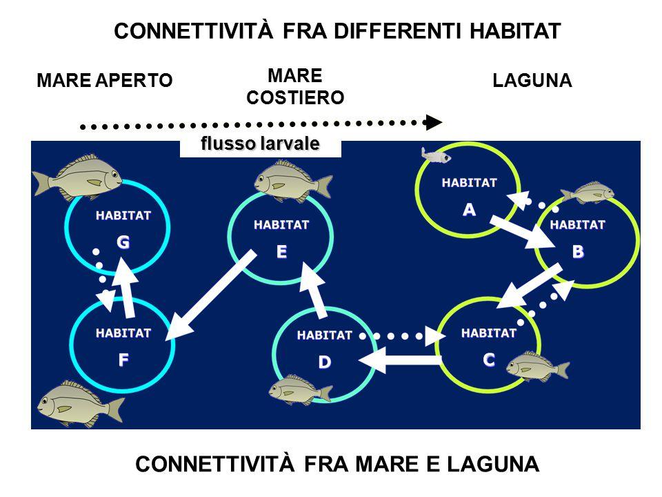 CONNETTIVITÀ FRA DIFFERENTI HABITAT CONNETTIVITÀ FRA MARE E LAGUNA