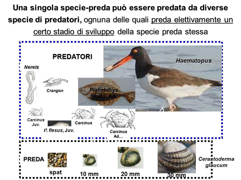 Una singola specie-preda può essere predata da diverse specie di predatori, ognuna delle quali preda elettivamente un certo stadio di sviluppo della specie preda stessa