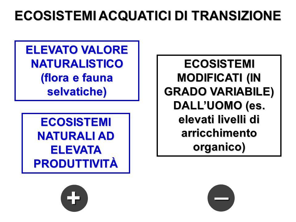 _ + ECOSISTEMI ACQUATICI DI TRANSIZIONE